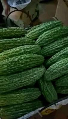 这是一张关于绿苦瓜 18cm以下 6~8两的产品图片