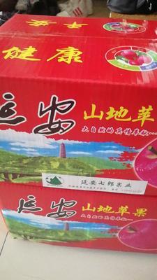 陕西省延安市宝塔区红富士苹果 光果 条红 70mm以上