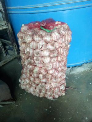 河南省周口市扶沟县白皮大蒜 5~5.5cm 多瓣蒜
