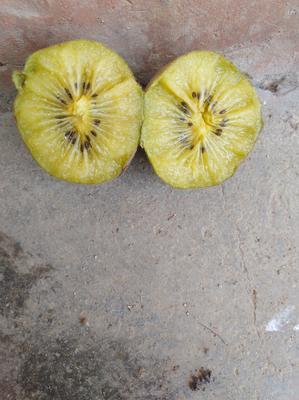 这是一张关于金桃猕猴桃 80~100克的产品图片