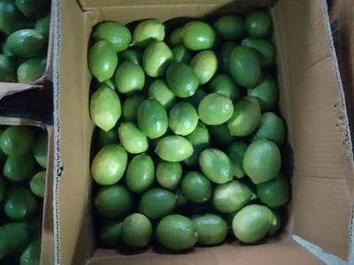 广东省佛山市南海区香水柠檬 2.7 - 3.2两