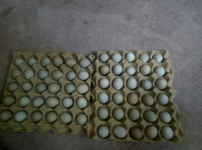 湖北省随州市曾都区绿壳鸡蛋 食用 箱装