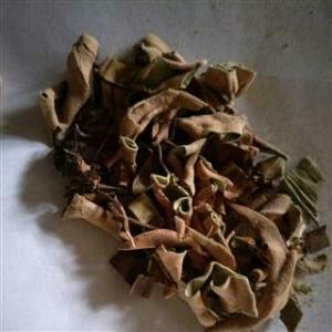 这是一张关于石韦的产品图片