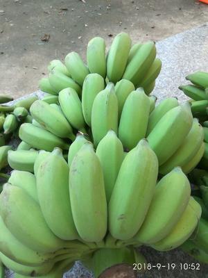 广西壮族自治区贵港市桂平市粉蕉 八成熟 40 - 50斤