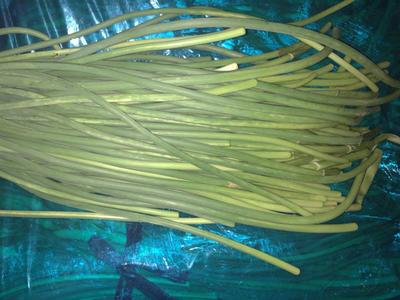 这是一张关于白帽蒜薹 一茬 50~60cm 通货的产品图片