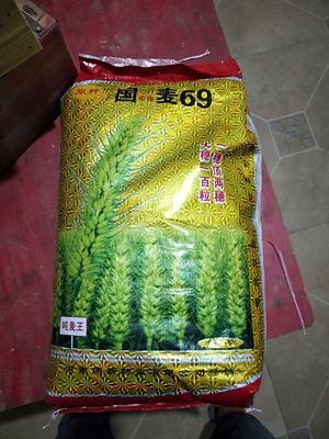 这是一张关于小麦种子的产品图片