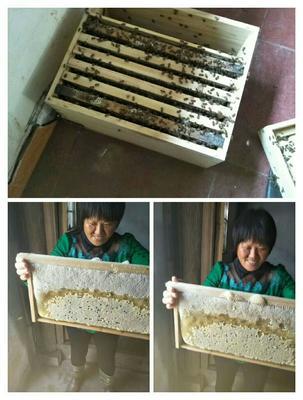 这是一张关于土蜂蜜 玻璃瓶装 100% 2年以上的产品图片