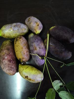 这是一张关于野生八月瓜 种植 60-70g的产品图片