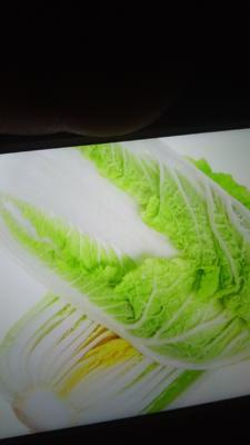 这是一张关于绿津白菜 3~6斤 毛菜的产品图片