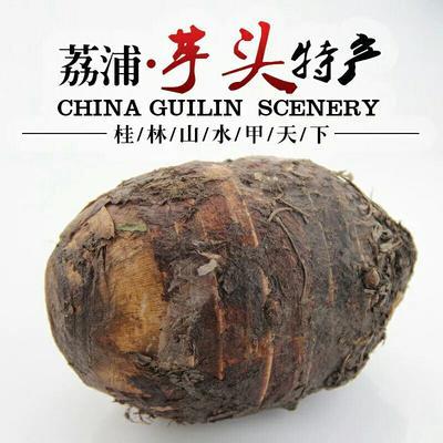 四川省德阳市罗江县荔浦芋头 6cm以上