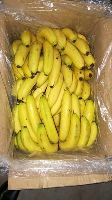 河北省邯郸市丛台区老挝香蕉 七成熟 18.0斤