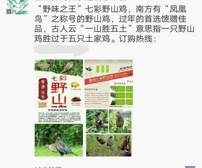 这是一张关于七彩山鸡 3-4斤的产品图片
