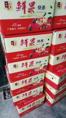 甘肃省天水市秦安县红富士苹果 纸袋 全红 80mm以上