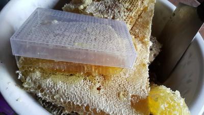 重庆石柱土家族自治县土蜂蜜 塑料瓶装 90%以上 1年