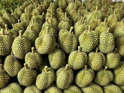 广西壮族自治区崇左市凭祥市泰国榴莲 90%以上 2 - 3公斤