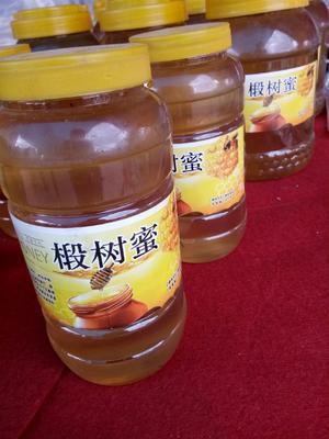 吉林省白山市抚松县土蜂蜜 塑料瓶装 98% 2年以上