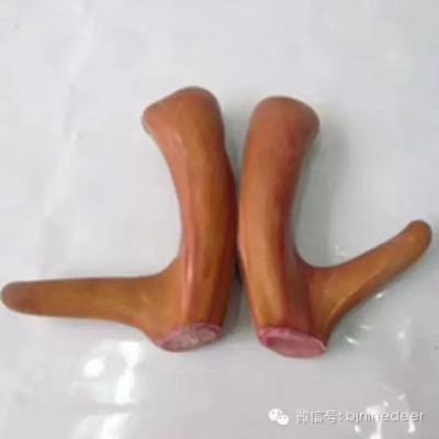 河南省濮阳市华龙区梅花鹿鹿茸
