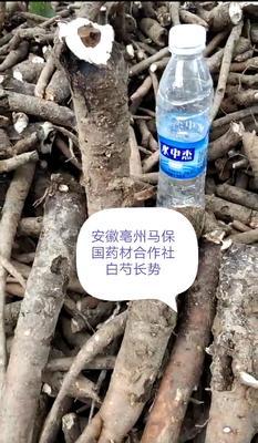 安徽省亳州市谯城区白芍