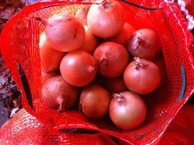 甘肃省张掖市肃南裕固族自治县黄皮洋葱 8cm以上 黄皮 4两以上