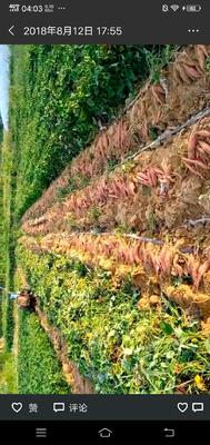 山东省青岛市莱西市烟薯25 红皮 混装通货
