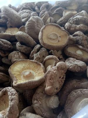 山西省长治市黎城县原木干香菇 散装 1年以上