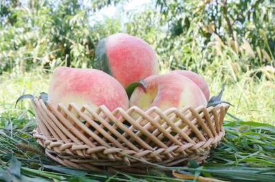 陕西省西安市户县映霜红蜜桃 70mm以上 4两以上