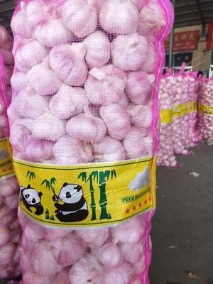重庆石柱土家族自治县金乡大蒜 5.5cm 多瓣蒜