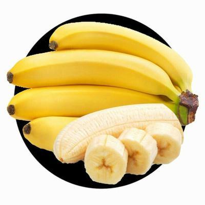 广东省广州市荔湾区威廉斯香蕉 七成熟 50 - 60斤