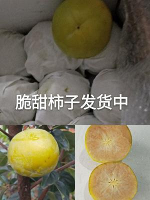 这是一张关于阳丰甜柿苗的产品图片