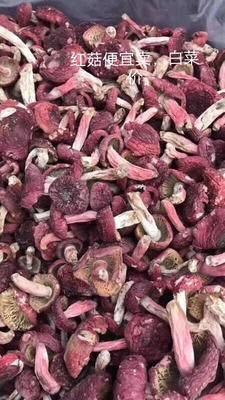 云南省保山市腾冲县干红菇 散装 1年以上