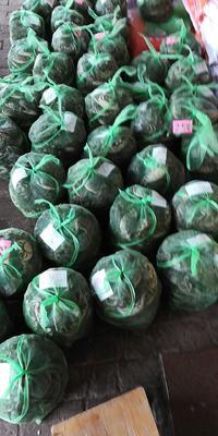 江苏省扬州市高邮市高邮湖大闸蟹 2.0-2.5两 统货