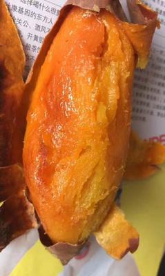 山东省德州市夏津县烟薯25 红皮 6两~1斤