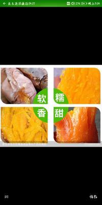 辽宁省沈阳市浑南区烟薯25 红皮 混装通货