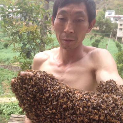湖南省长沙市长沙县柑橘蜜 塑料瓶装 100% 2年以上