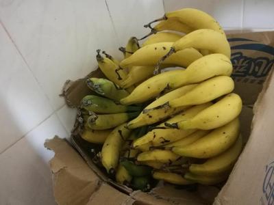 海南省海南省澄迈县海南蕉 九成熟 40斤以下