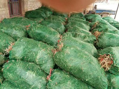 这是一张关于西闫黄花菜 袋装 一级的产品图片