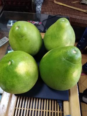 湖南省常德市桃源县蜜柚 2.5斤以上