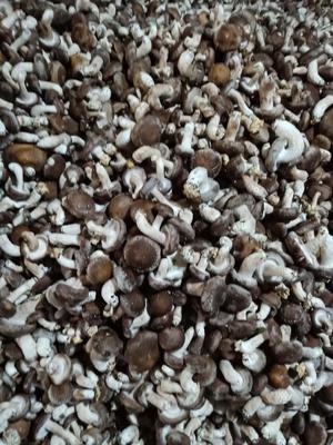 这是一张关于椴木香菇 4cm以下 鲜香菇的产品图片