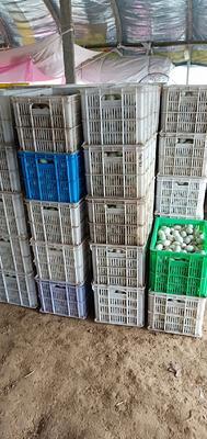 安徽省滁州市凤阳县青皮鸭蛋 食用 箱装