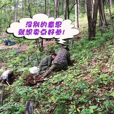 这是一张关于长白山带土鲜参 鲜参的产品图片