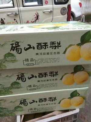 这是一张关于砀山酥梨 250-300g 60mm以上的产品图片