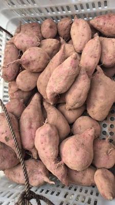 湖南省怀化市麻阳苗族自治县板栗薯 红皮 6两~1斤