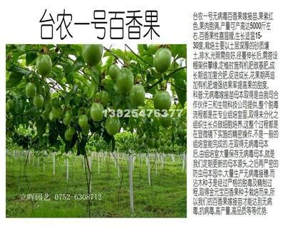 广西壮族自治区玉林市容县台农一号百香果 统货