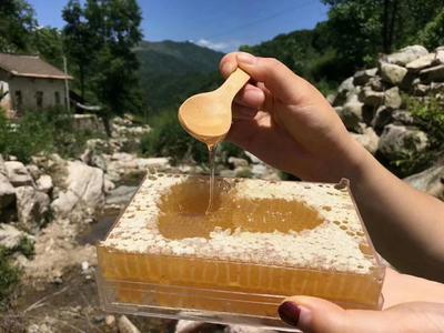 云南省曲靖市罗平县云南冬蜂蜜 塑料瓶装 100% 1年