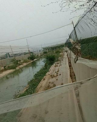 河北省邯郸市曲周县黑斑蛙