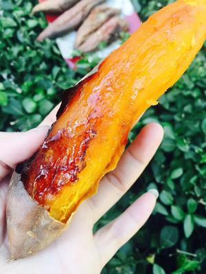山东省济南市章丘市烟薯25 红皮 6两~1斤