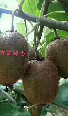 陕西省宝鸡市眉县徐香猕猴桃 80~100克