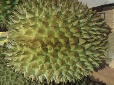 广西壮族自治区南宁市江南区泰国金枕榴莲 80 - 90%以上 3.8公斤