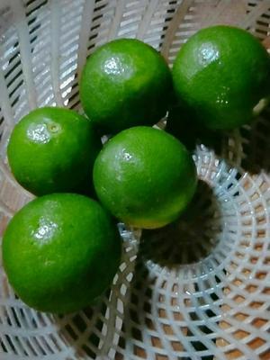 广西壮族自治区玉林市兴业县青柠檬 1 - 1.5两