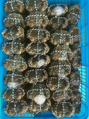 江苏省南京市高淳区固城湖大闸蟹 1.2两 母蟹